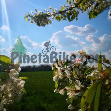 Risveglio primavera del Parco Pineta